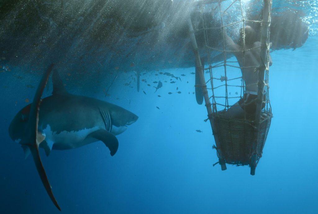 Köpekbalığı Kontrolü Sahnesi